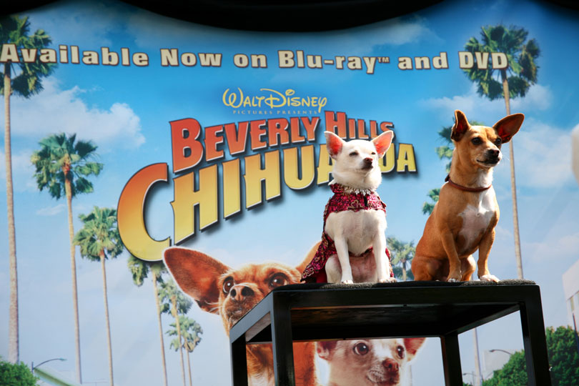 Bolt/Beverly Hills Chihuahua